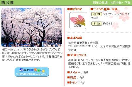 2006-hanami3.jpg